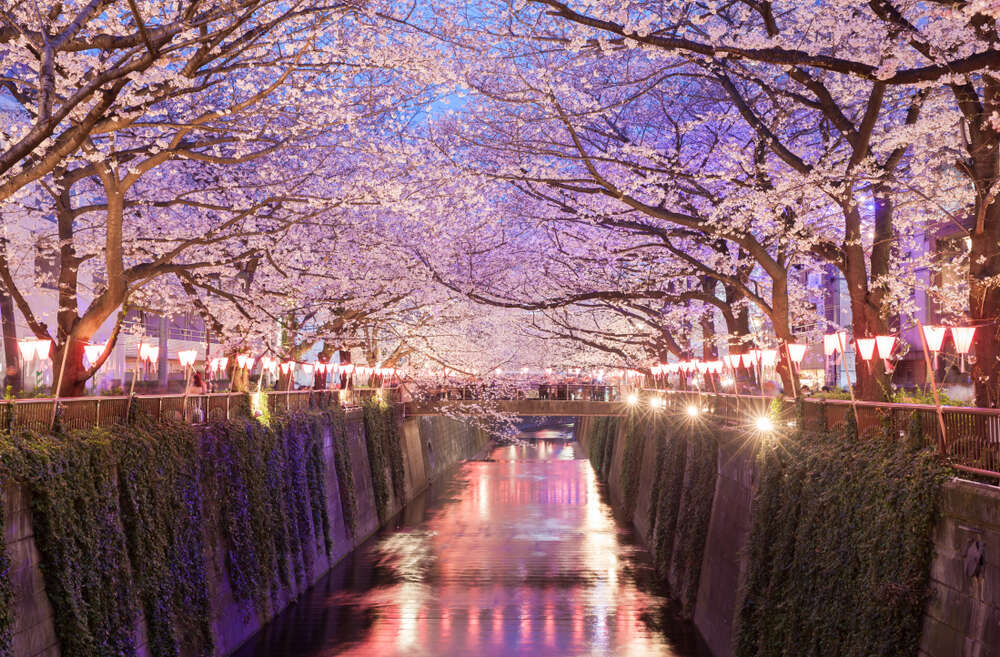 When Sakura Blooms in Japan - 2019 | Photos of cherry blossoms in